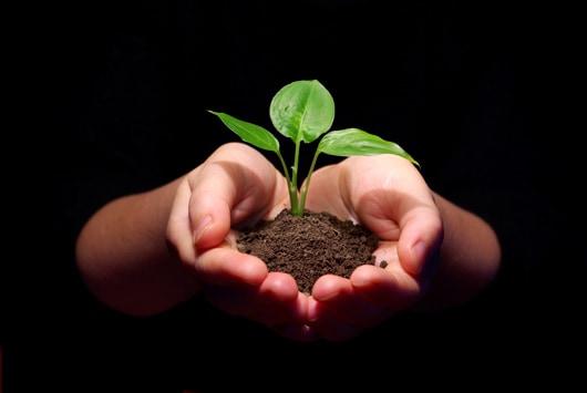 plant_et_trae